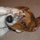 ¿Cómo notar si un perro tiene epilepsia?