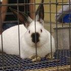 Cómo construir jaulas de interior para conejos