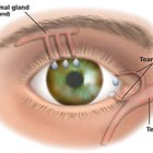 How does the human tear duct work?