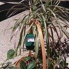 Cómo fertilizar un jardín con sales Epsom