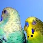 Cómo hacer una caja de nidificación para periquitos