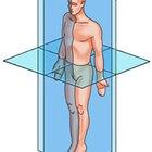 Como saber a diferença entre os planos e eixos do corpo
