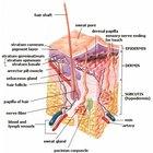 Viral skin rashes in adults