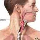 Qual é a função da epiglote?