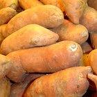 Cómo cocinar batatas en el microondas