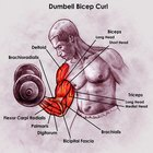 Exercises for the biceps triceps quadriceps & hamstrings