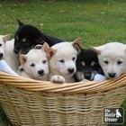 El top 10 de los cachorros más adorables