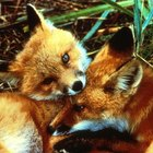 What Do Woodland Animals Eat?