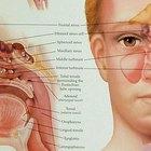 Sinus infection & eye pain