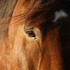 Cómo tratar los problemas del ojo de un caballo