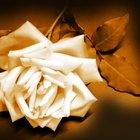 Sympathy Flowers Etiquette