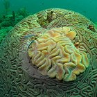 How to Make Coral Reefs for a Project