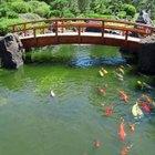 Fish pond filter idea