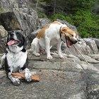 Tratamientos caseros para la diarrea, el vómito y la pérdida de apetito en los perros