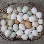 ¿Por cuánto tiempo se deben hervir los huevos para hacer huevos duros?