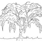 How to Draw A Willow Tree