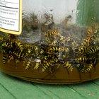 Homemade Dish Soap Bee Trap
