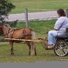 Building plans for horse carts