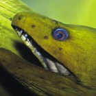 Facts about eels for kids