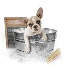 Cómo deshacerte de las pulgas de tu perro con remedios caseros