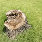 How to cover up a stump in your garden