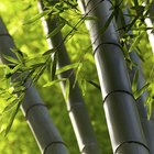 How to cut bamboo poles