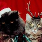 Las 10 razas de gatos más amigables