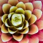 Esta flor es para ti: el significado de 8 flores