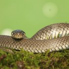 How to get rid of grass snakes