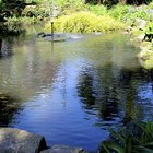 How to repair preformed moulded ponds