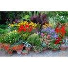 Plantas para infusiones fáciles de cuidar
