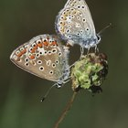 How to breed and raise butterflies