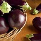 How to know when an aubergine has spoiled