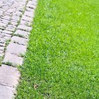 How to install brick lawn edging