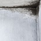 How do I get rid of white hairy mould on walls?