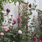 How to fix a trellis to a wall
