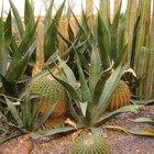 Plantas para tierras áridas