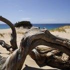 How can I preserve driftwood?