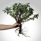 Chemicals that kill tree roots
