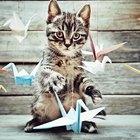 Treinando gatos para não atacar pássaros de estimação