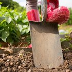 Can you dig up bulbs in the spring?