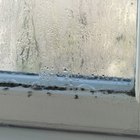 How to clean up black mould from window sills