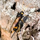 How to kill wood wasps