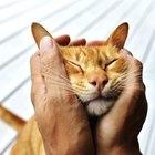 Diferenças de personalidade entre gatos machos e fêmeas