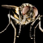 How to identify flying biting insects