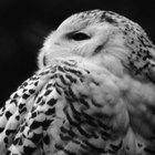 How to sterilise owl pellets