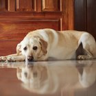 Home treatment for pancreatitis in dogs