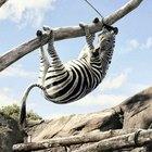 As maiores zebras da história das Copas do Mundo