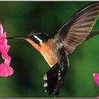 Como fazer néctar para beija-flores
