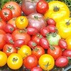 Cómo escalfar los tomates
